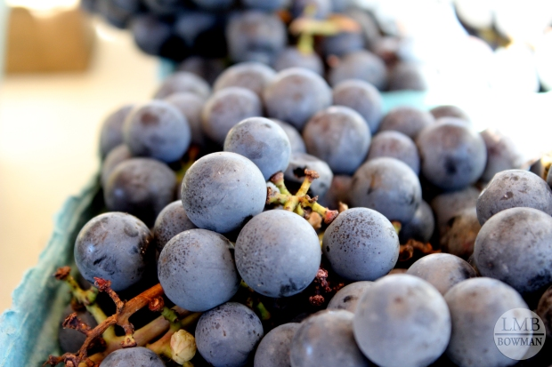Concord grapes at the Farmer's market.