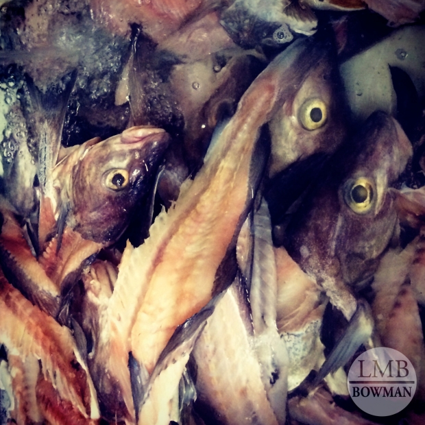 Lots and lots of fish to gut and clean for fish stock.