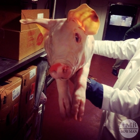 Welcome to Meat ID and Fabrication!